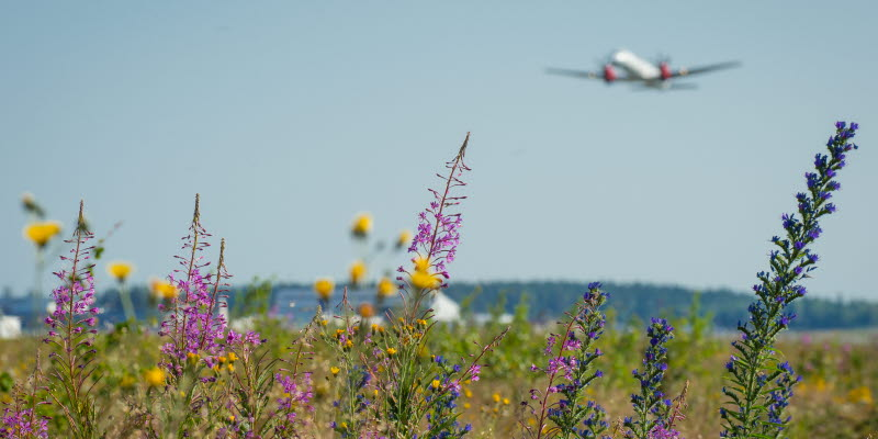 Airplane and flowers
